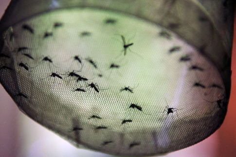 Demam Dengue Bukan Sekedar Demam Biasa