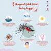 Mengenal Lebih Dekat Aedes Aegypti